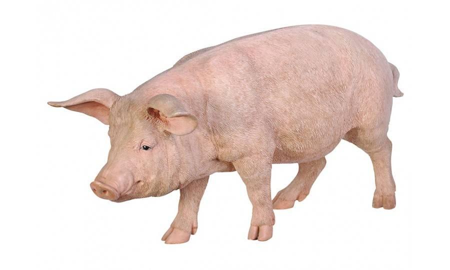 Statue réaliste Cochon