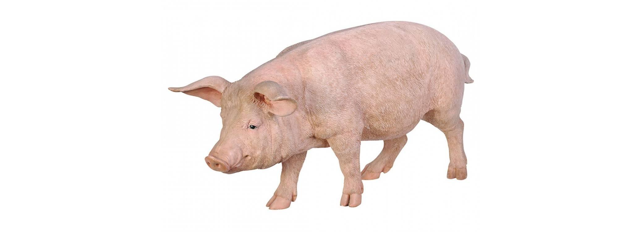 Statue réaliste - Cochon